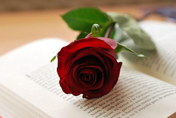 Diada_Sant_Jordi_rosa_i_llibre